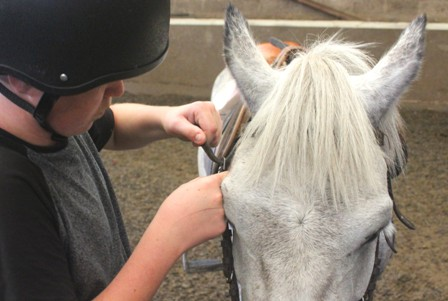 putting on a bridle
